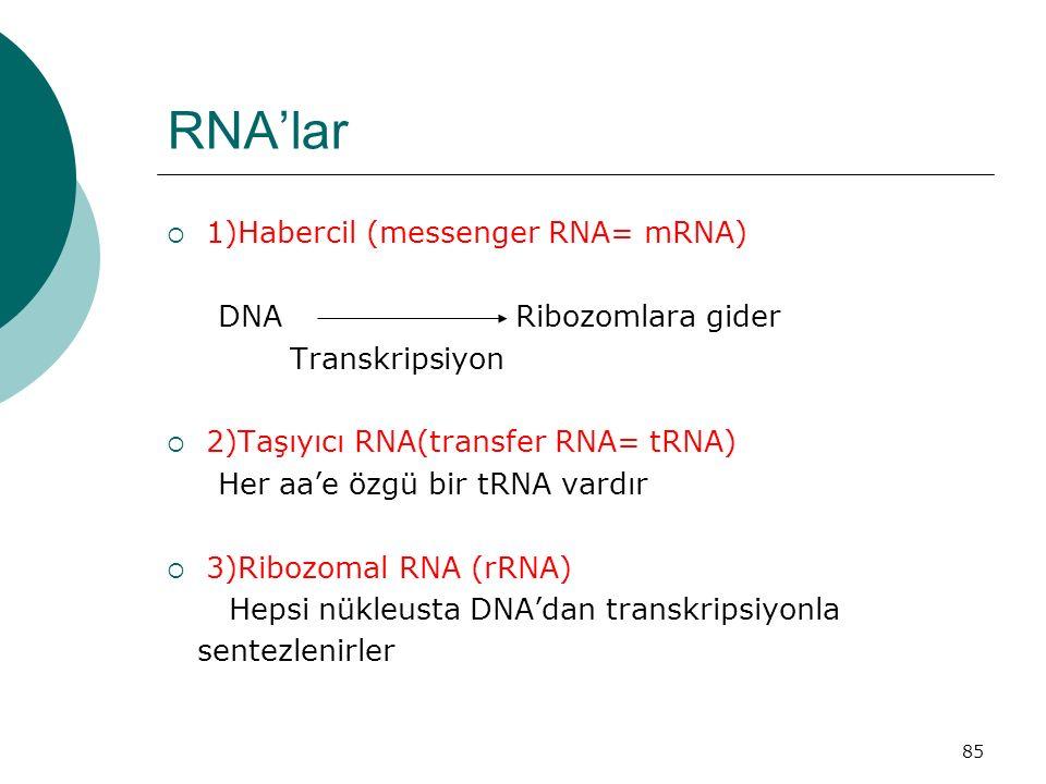 RNA'lar 1)Habercil (messenger RNA= mRNA) DNA Ribozomlara gider