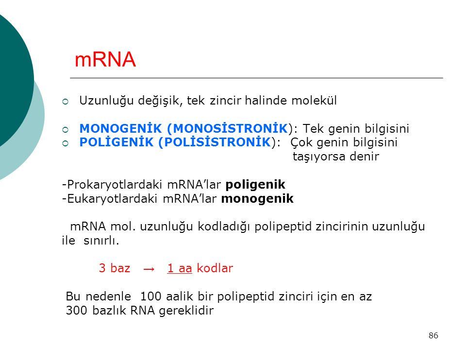 mRNA Uzunluğu değişik, tek zincir halinde molekül