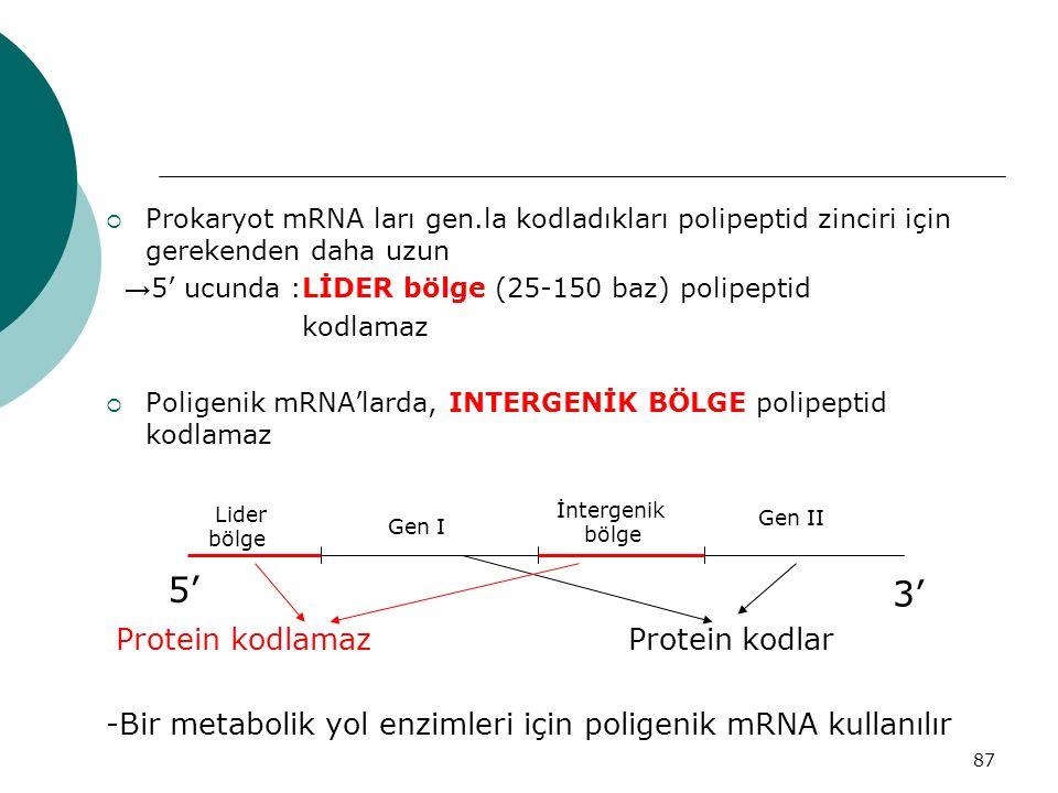 5' 3' Protein kodlamaz Protein kodlar