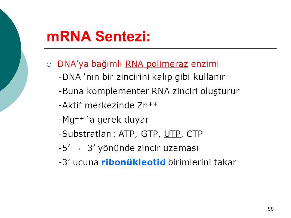 mRNA Sentezi: DNA'ya bağımlı RNA polimeraz enzimi