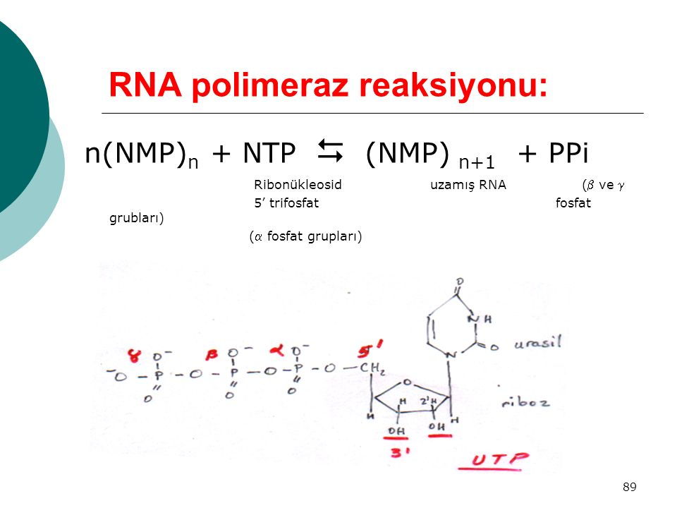 RNA polimeraz reaksiyonu: