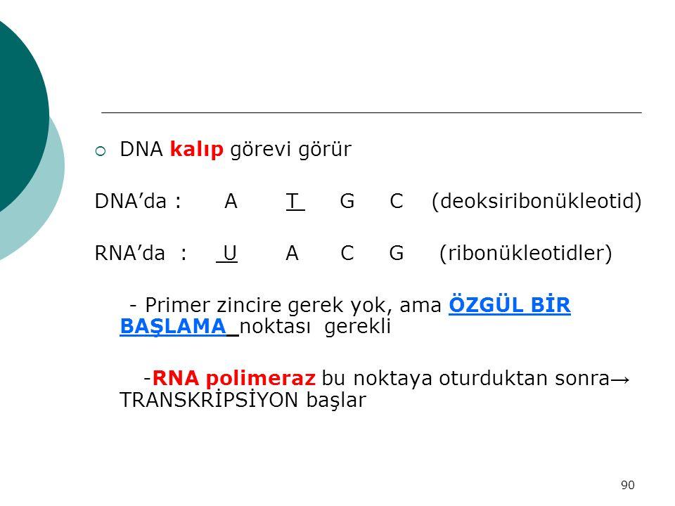 DNA kalıp görevi görür DNA'da : A T G C (deoksiribonükleotid) RNA'da : U A C G (ribonükleotidler)