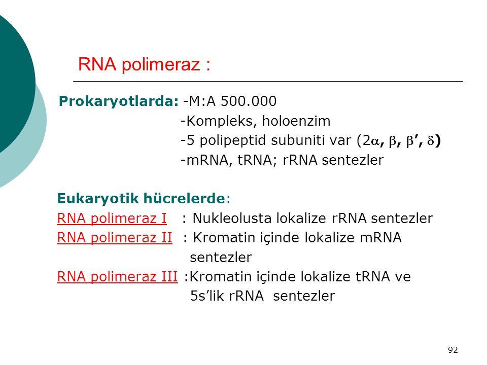 RNA polimeraz : -Kompleks, holoenzim