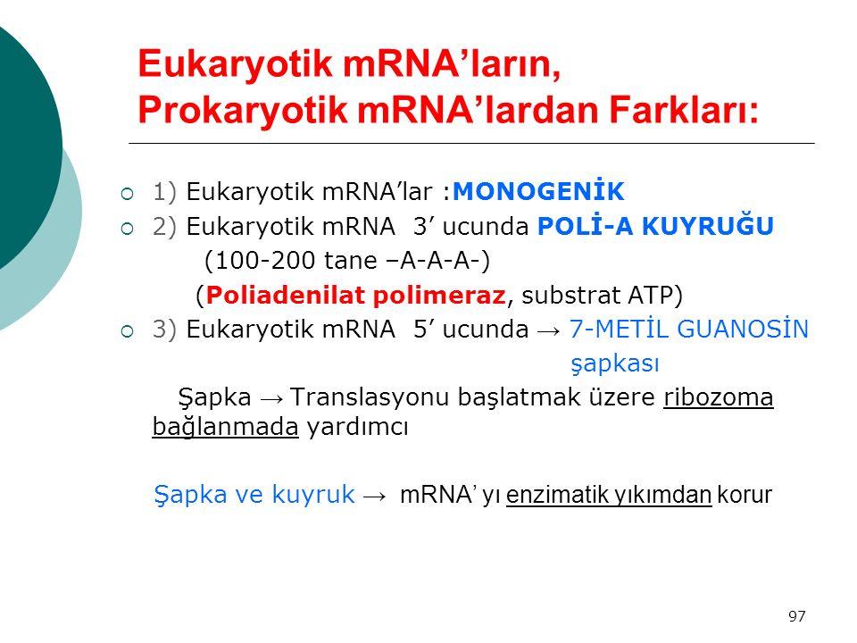 Eukaryotik mRNA'ların, Prokaryotik mRNA'lardan Farkları: