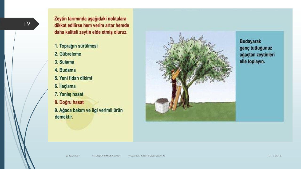 © zeytinist mucahit@zeytin.org.tr www.mucahitkivrak.com.tr