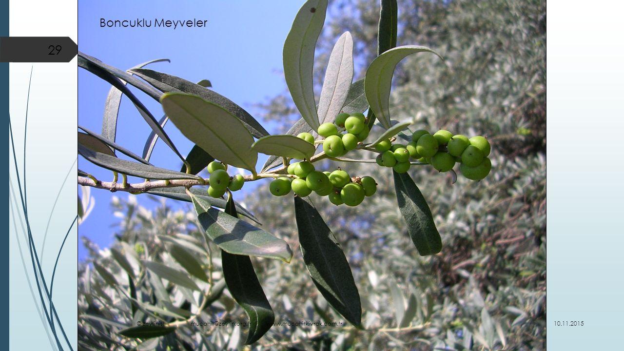 Boncuklu Meyveler © zeytinist mucahit@zeytin.org.tr www.mucahitkivrak.com.tr.