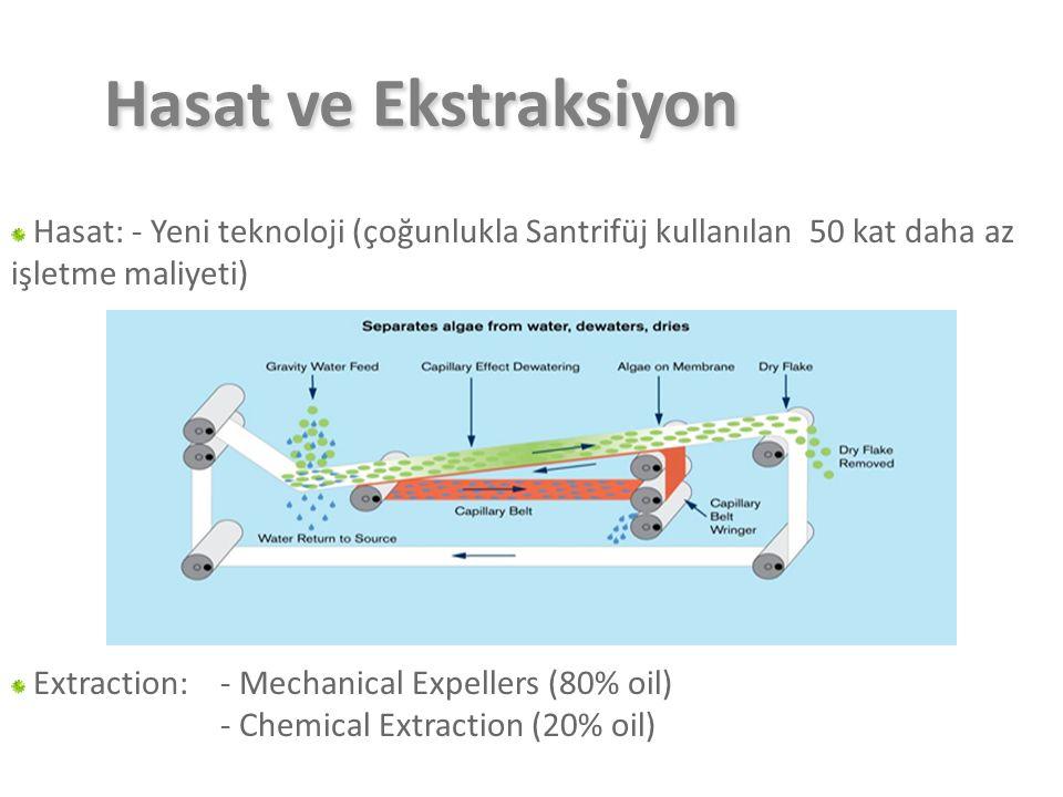 Hasat ve Ekstraksiyon Hasat: - Yeni teknoloji (çoğunlukla Santrifüj kullanılan 50 kat daha az işletme maliyeti)