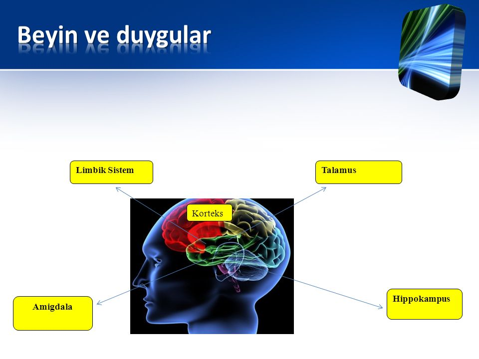 Beyin ve duygular Limbik Sistem Talamus Korteks Hippokampus Amigdala