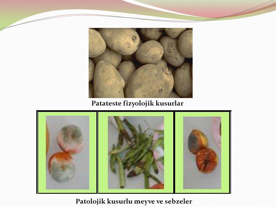 Patateste fizyolojik kusurlar
