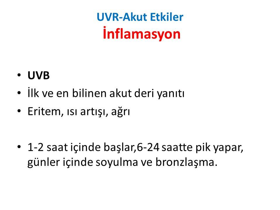 UVR-Akut Etkiler İnflamasyon