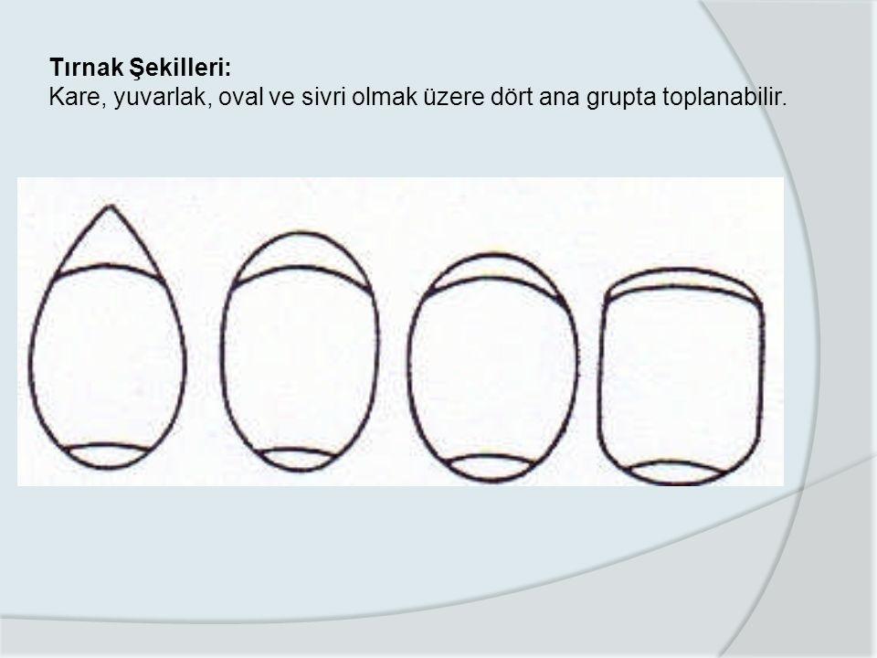 Tırnak Şekilleri: Kare, yuvarlak, oval ve sivri olmak üzere dört ana grupta toplanabilir.