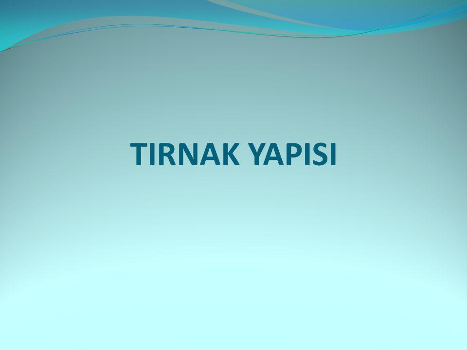TIRNAK YAPISI