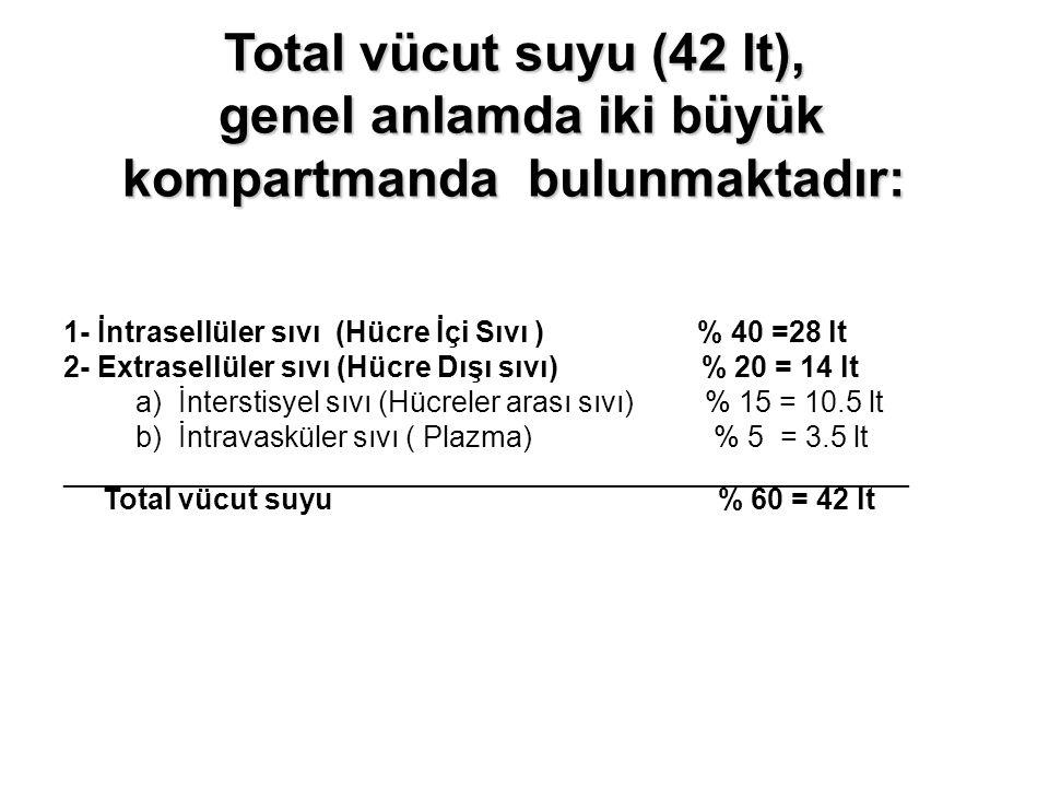 Total vücut suyu (42 lt), genel anlamda iki büyük kompartmanda bulunmaktadır:
