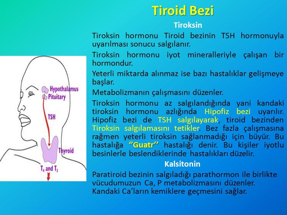 Tiroid Bezi Tiroksin. Tiroksin hormonu Tiroid bezinin TSH hormonuyla uyarılması sonucu salgılanır.