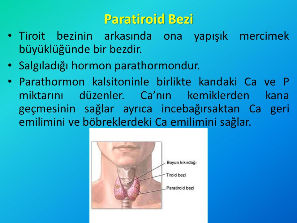 Paratiroid Bezi Tiroit bezinin arkasında ona yapışık mercimek büyüklüğünde bir bezdir. Salgıladığı hormon parathormondur.