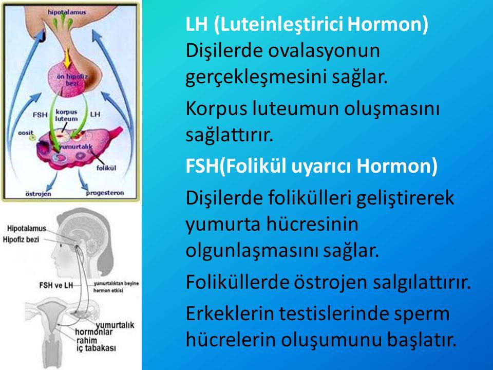 LH (Luteinleştirici Hormon) Dişilerde ovalasyonun gerçekleşmesini sağlar.