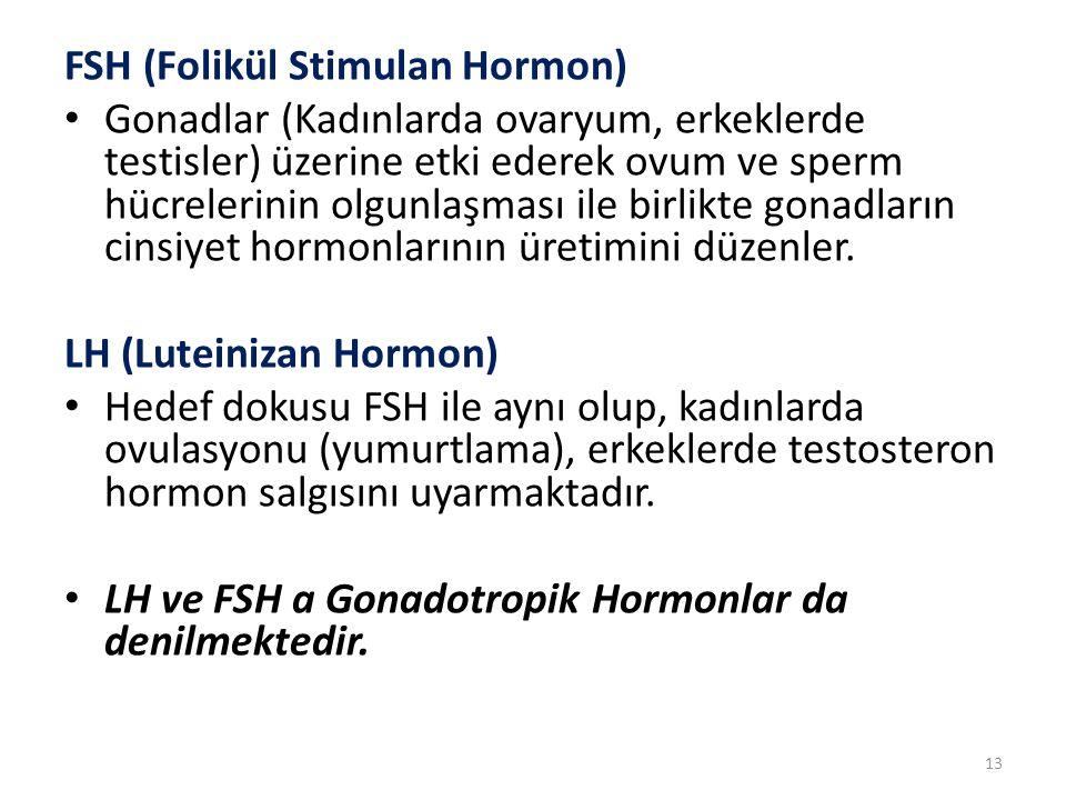 FSH (Folikül Stimulan Hormon)