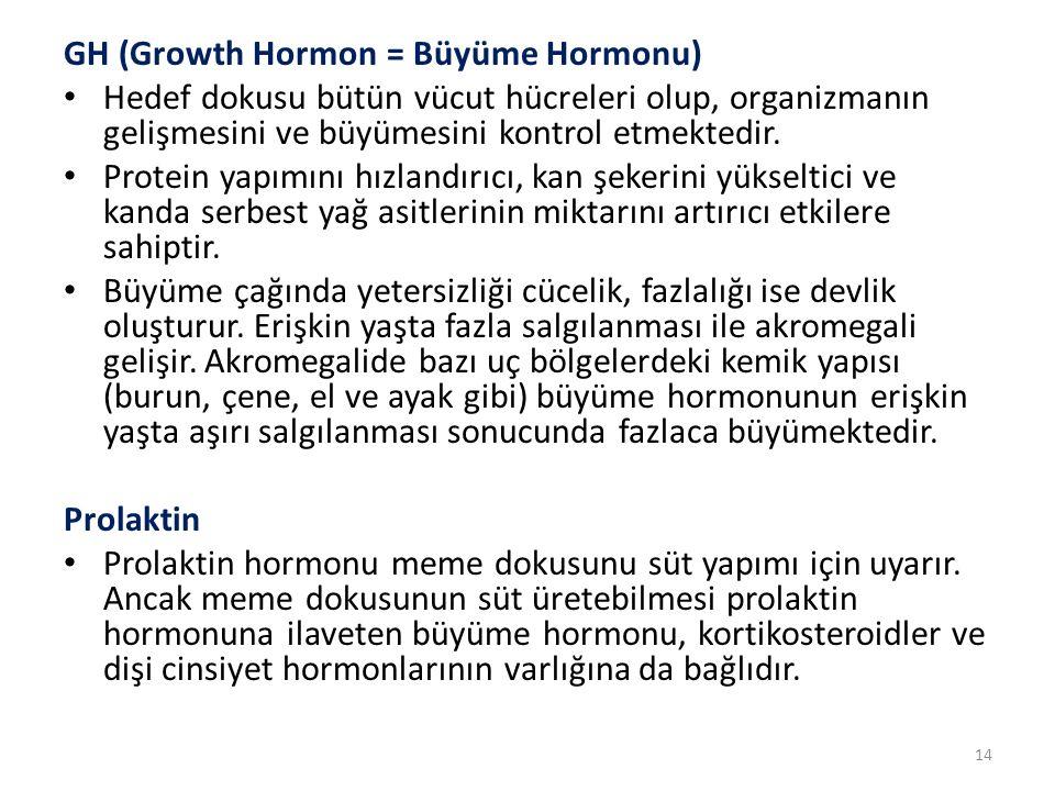 GH (Growth Hormon = Büyüme Hormonu)
