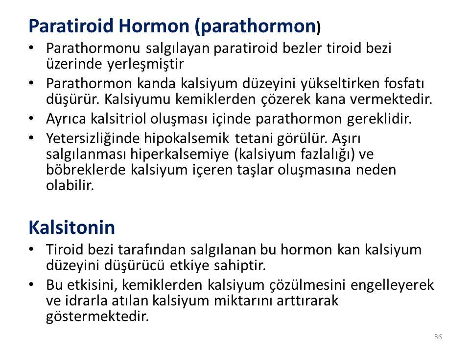 Paratiroid Hormon (parathormon)