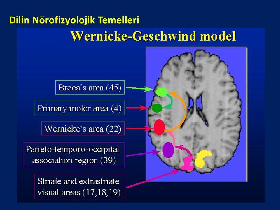 Dilin Nörofizyolojik Temelleri