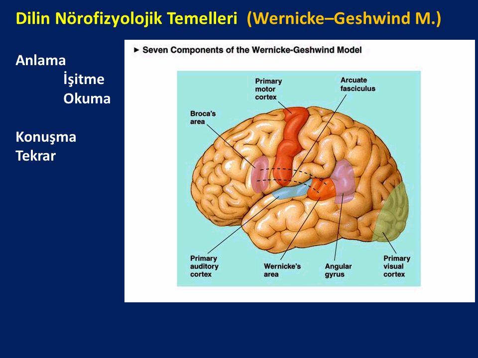 Dilin Nörofizyolojik Temelleri (Wernicke–Geshwind M.)