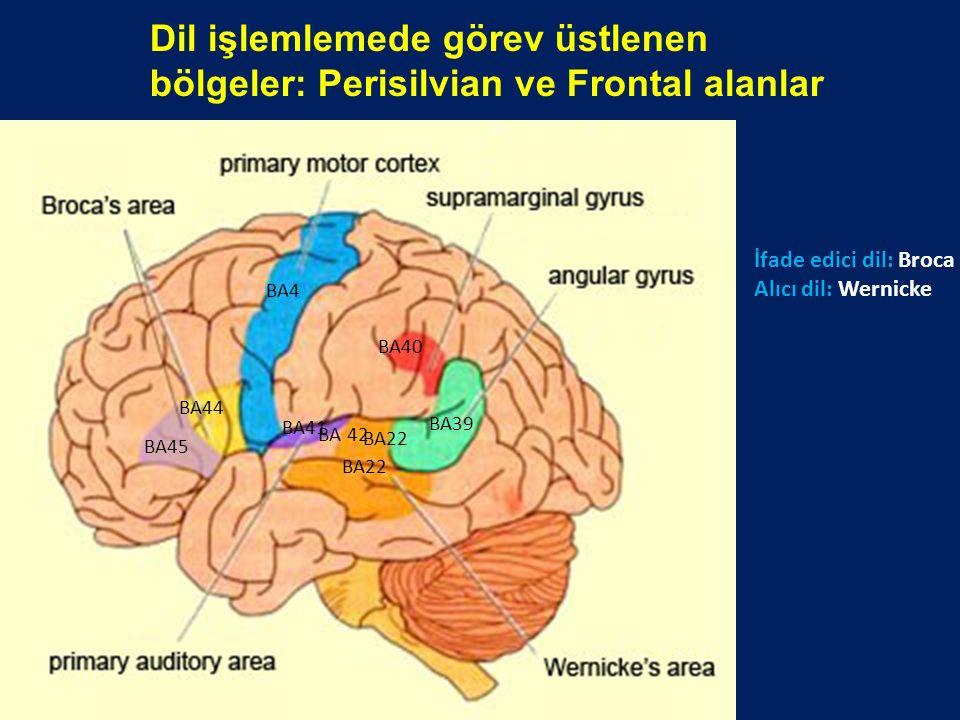 Dil işlemlemede görev üstlenen bölgeler: Perisilvian ve Frontal alanlar