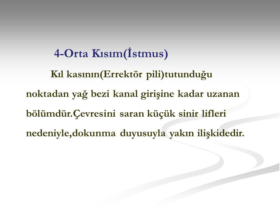 4-Orta Kısım(İstmus)