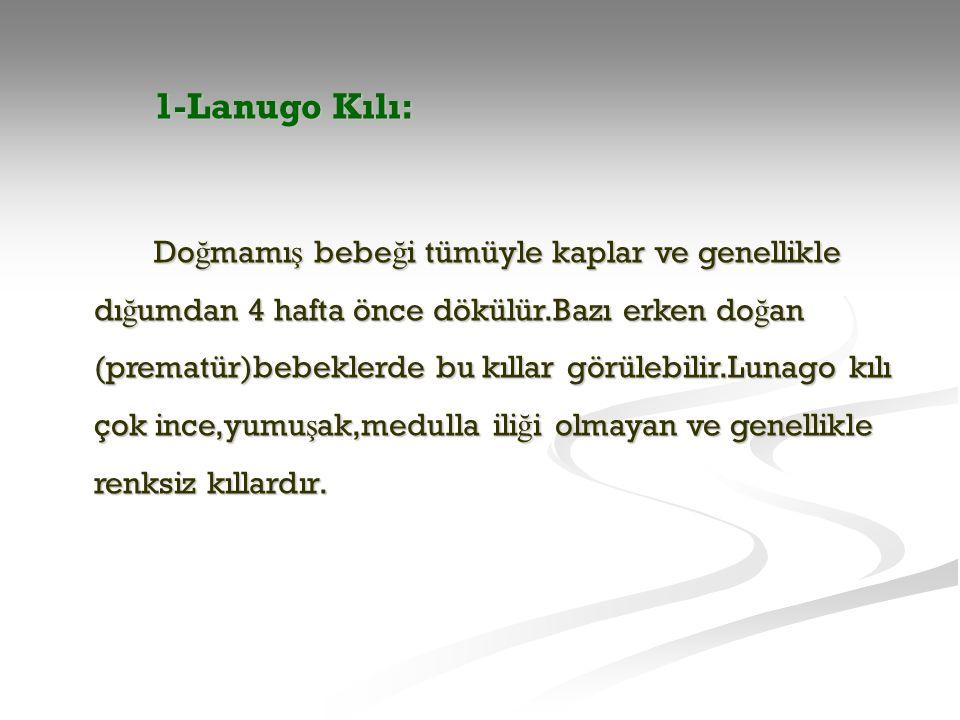1-Lanugo Kılı: