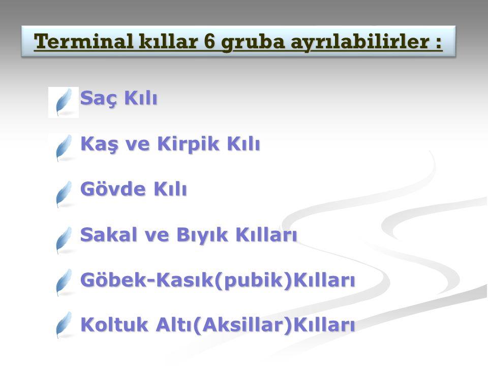 Terminal kıllar 6 gruba ayrılabilirler :