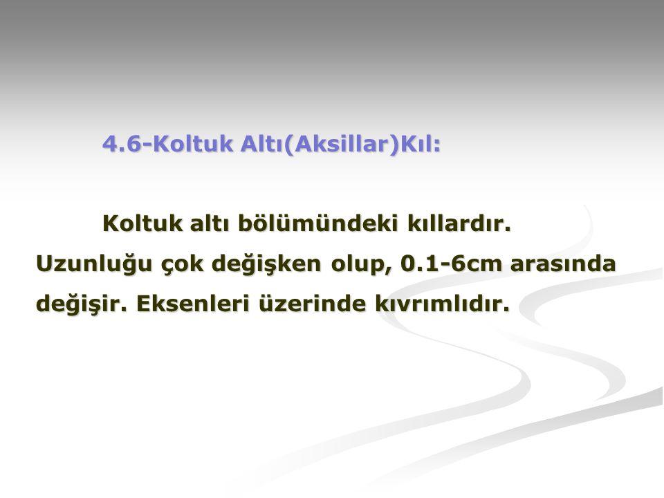4. 6-Koltuk Altı(Aksillar)Kıl:. Koltuk altı bölümündeki kıllardır