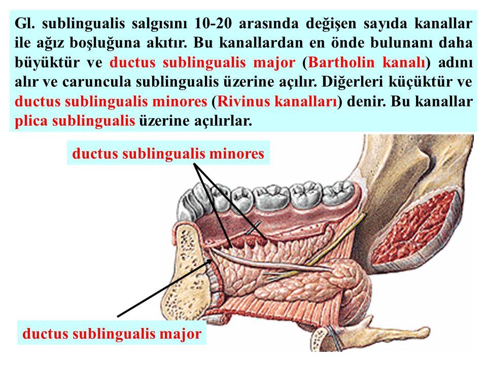 Gl. sublingualis salgısını 10-20 arasında değişen sayıda kanallar ile ağız boşluğuna akıtır. Bu kanallardan en önde bulunanı daha büyüktür ve ductus sublingualis major (Bartholin kanalı) adını alır ve caruncula sublingualis üzerine açılır. Diğerleri küçüktür ve ductus sublingualis minores (Rivinus kanalları) denir. Bu kanallar plica sublingualis üzerine açılırlar.