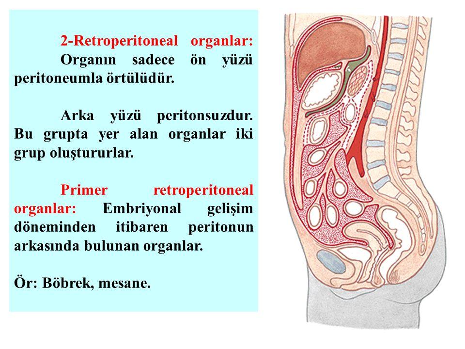 2-Retroperitoneal organlar: