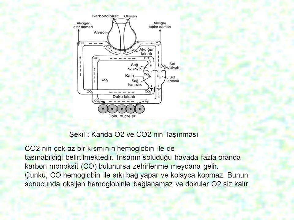 Şekil : Kanda O2 ve CO2 nin Taşınması