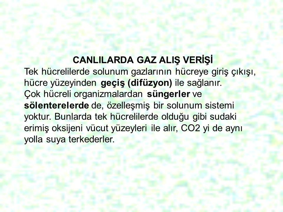 CANLILARDA GAZ ALIŞ VERİŞİ