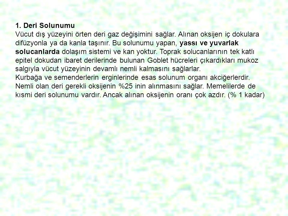 1. Deri Solunumu