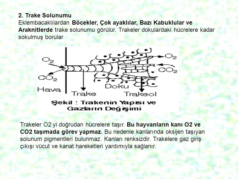 2. Trake Solunumu