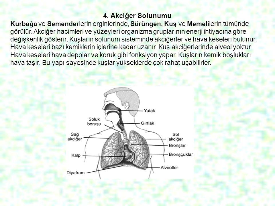 4. Akciğer Solunumu