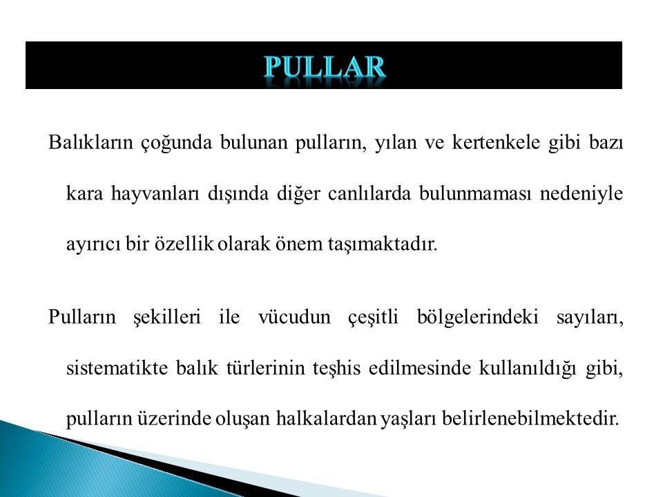 PULLAR