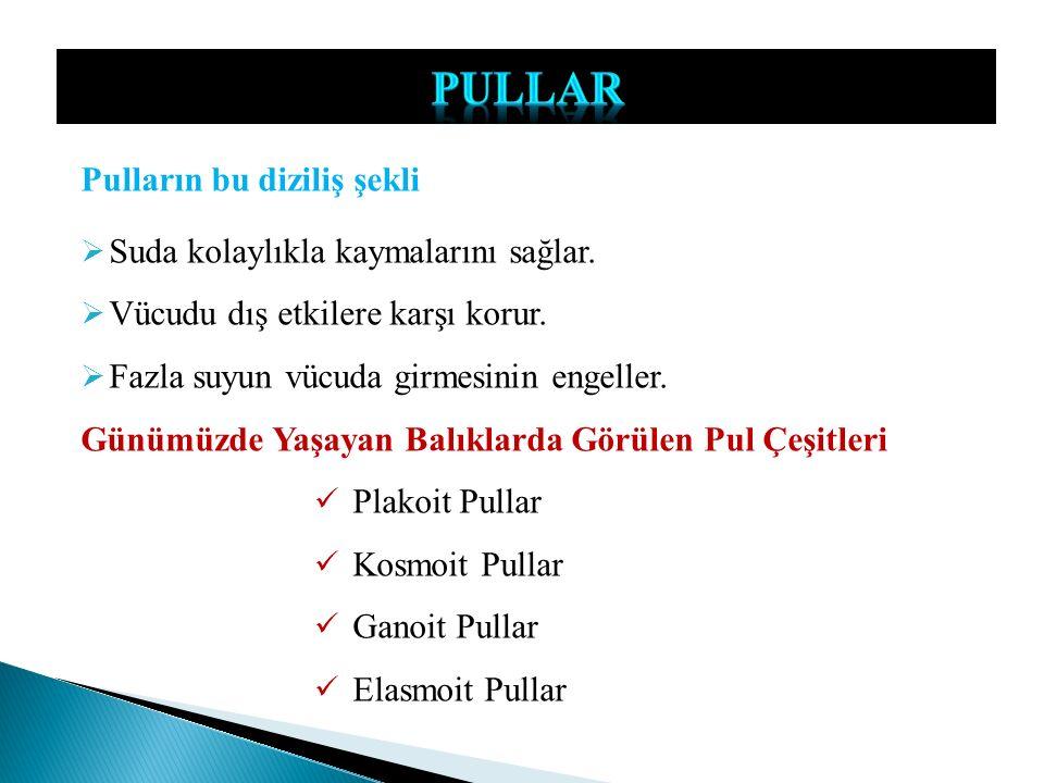 PULLAR Pulların bu diziliş şekli Suda kolaylıkla kaymalarını sağlar.