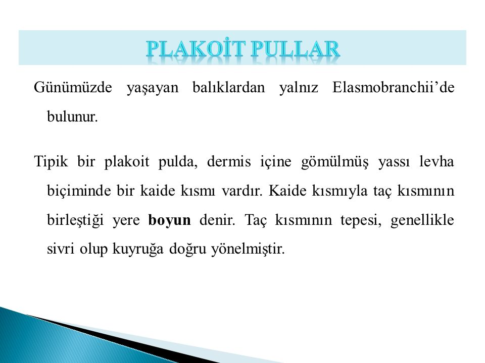 PLAKOİT PULLAR