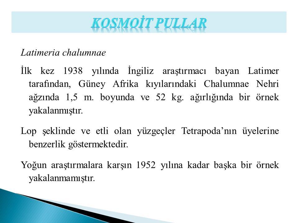 KOSMOİT PULLAR