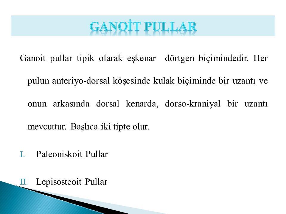 GANOİT PULLAR