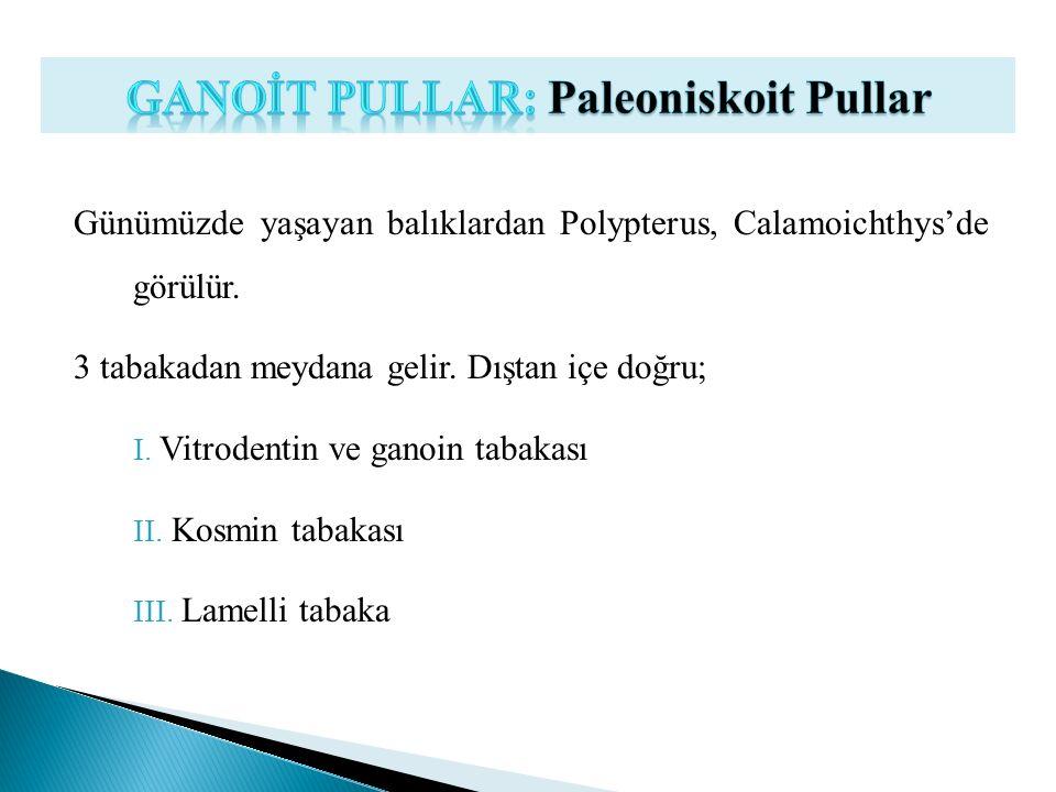 GANOİT PULLAR: Paleoniskoit Pullar