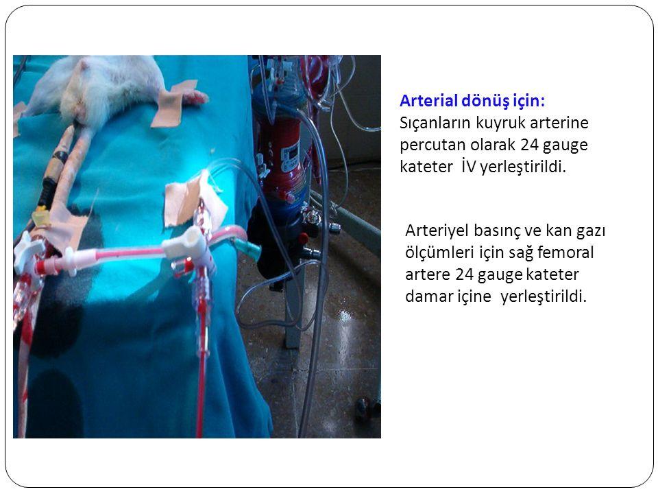 GEREÇ ve YÖNTEM Arterial dönüş için: Sıçanların kuyruk arterine percutan olarak 24 gauge kateter İV yerleştirildi.