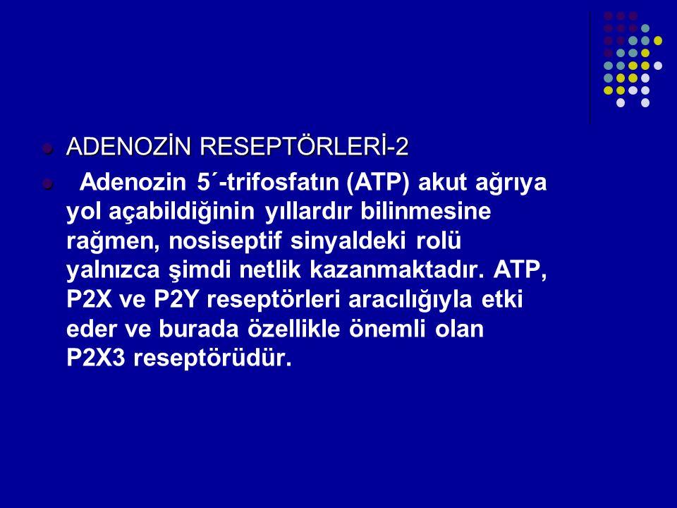 ADENOZİN RESEPTÖRLERİ-2