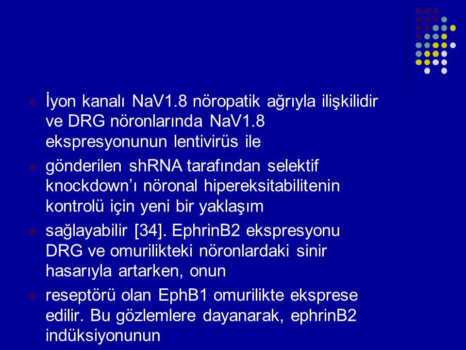 İyon kanalı NaV1.8 nöropatik ağrıyla ilişkilidir ve DRG nöronlarında NaV1.8 ekspresyonunun lentivirüs ile