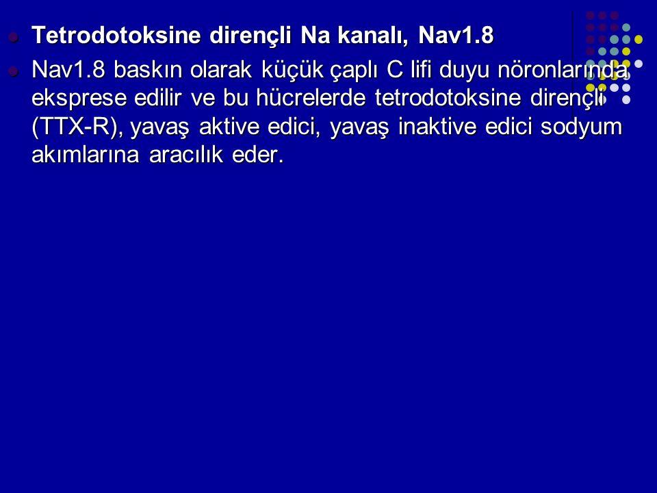 Tetrodotoksine dirençli Na kanalı, Nav1.8