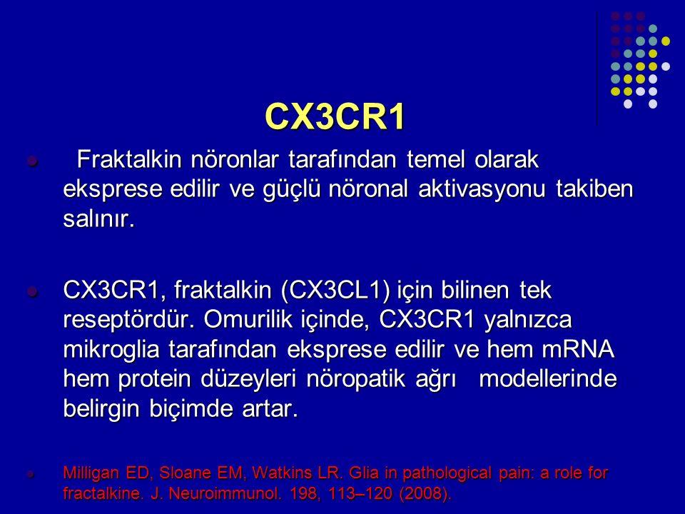 CX3CR1 Fraktalkin nöronlar tarafından temel olarak eksprese edilir ve güçlü nöronal aktivasyonu takiben salınır.