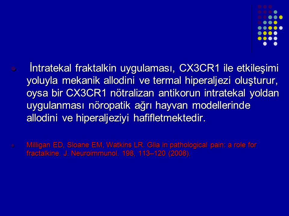 İntratekal fraktalkin uygulaması, CX3CR1 ile etkileşimi yoluyla mekanik allodini ve termal hiperaljezi oluşturur, oysa bir CX3CR1 nötralizan antikorun intratekal yoldan uygulanması nöropatik ağrı hayvan modellerinde allodini ve hiperaljeziyi hafifletmektedir.
