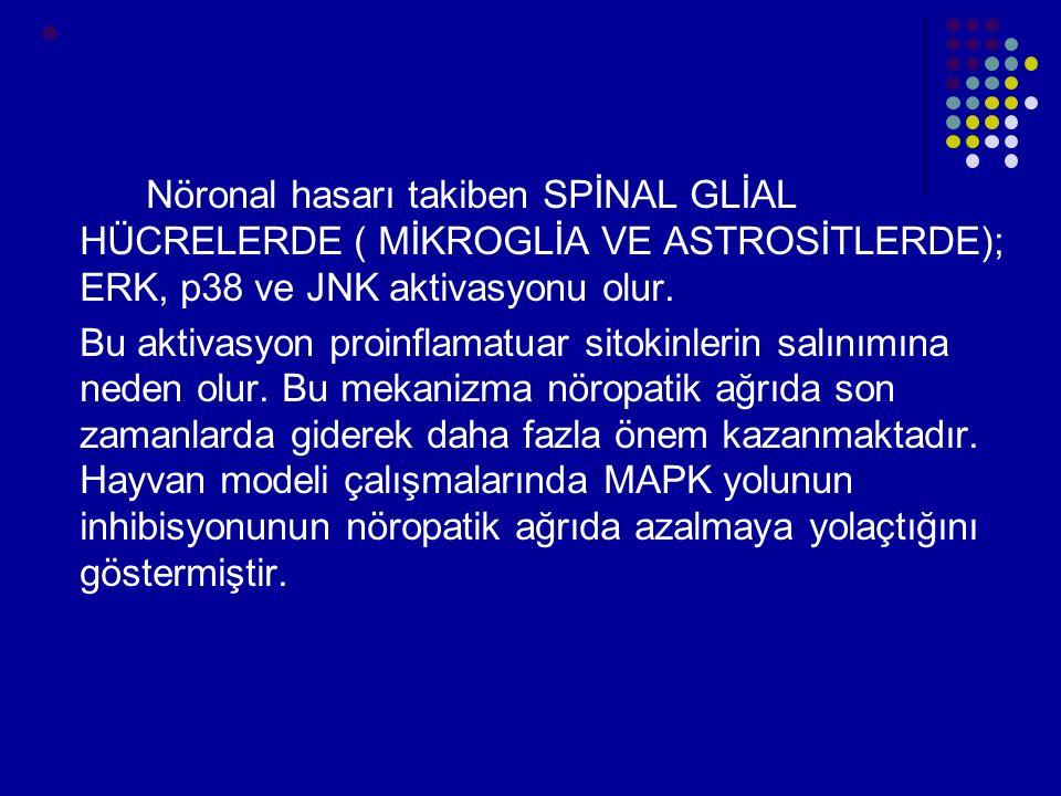 Nöronal hasarı takiben SPİNAL GLİAL HÜCRELERDE ( MİKROGLİA VE ASTROSİTLERDE); ERK, p38 ve JNK aktivasyonu olur.